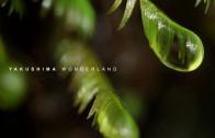 YAKUSHIMA WONDERLAND
